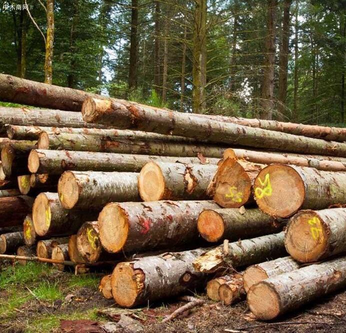 采购大量云杉原木20加以上