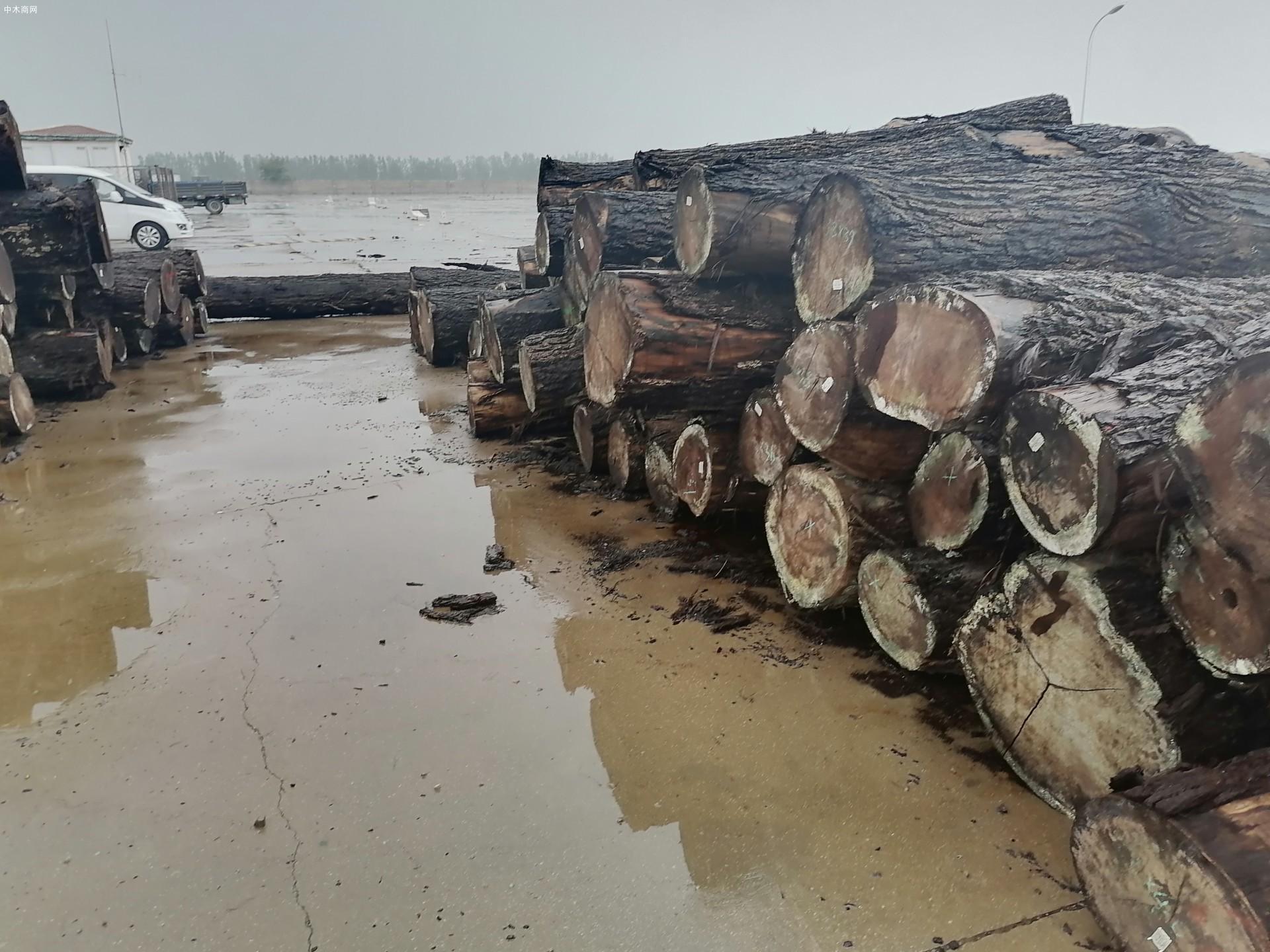 美国黑胡桃原木源头供应商供应