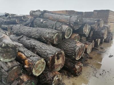 北美黑胡桃原木价格多少钱?