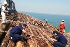 5.14万吨进口原木从曹妃甸海关顺利通关