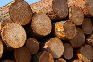 中国市场俄罗斯原木进口量下滑明显