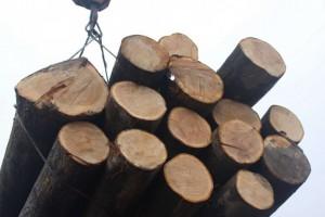 英国过去三个季度的木材进口量达到创纪录水平