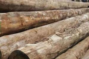 缅甸边境木材运输成本涨三倍
