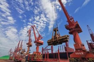 蓬莱港木材特色货源再次焕发勃勃生机