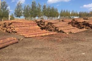 绥芬河镇前进村木业园区发展迅猛