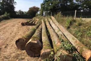 法国政府推动林业包容性就业