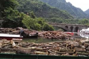 浙江上海等地木材商家通过停工等应对强台风来袭