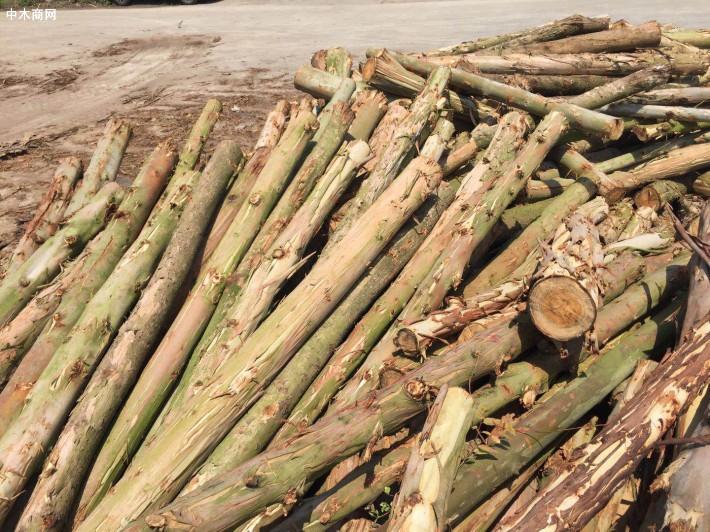 广西桉木原材料在进一步涨价