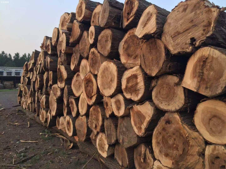 求购:30以上2.6米杨木原木
