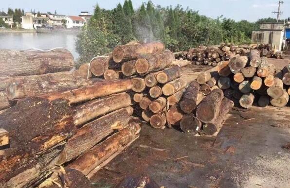 亚马孙地区森林火灾情况逐年加剧