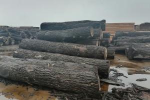 芝加哥木材期货价格保持在600美元上方