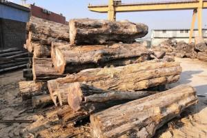 印度尼西亚原木产量上升