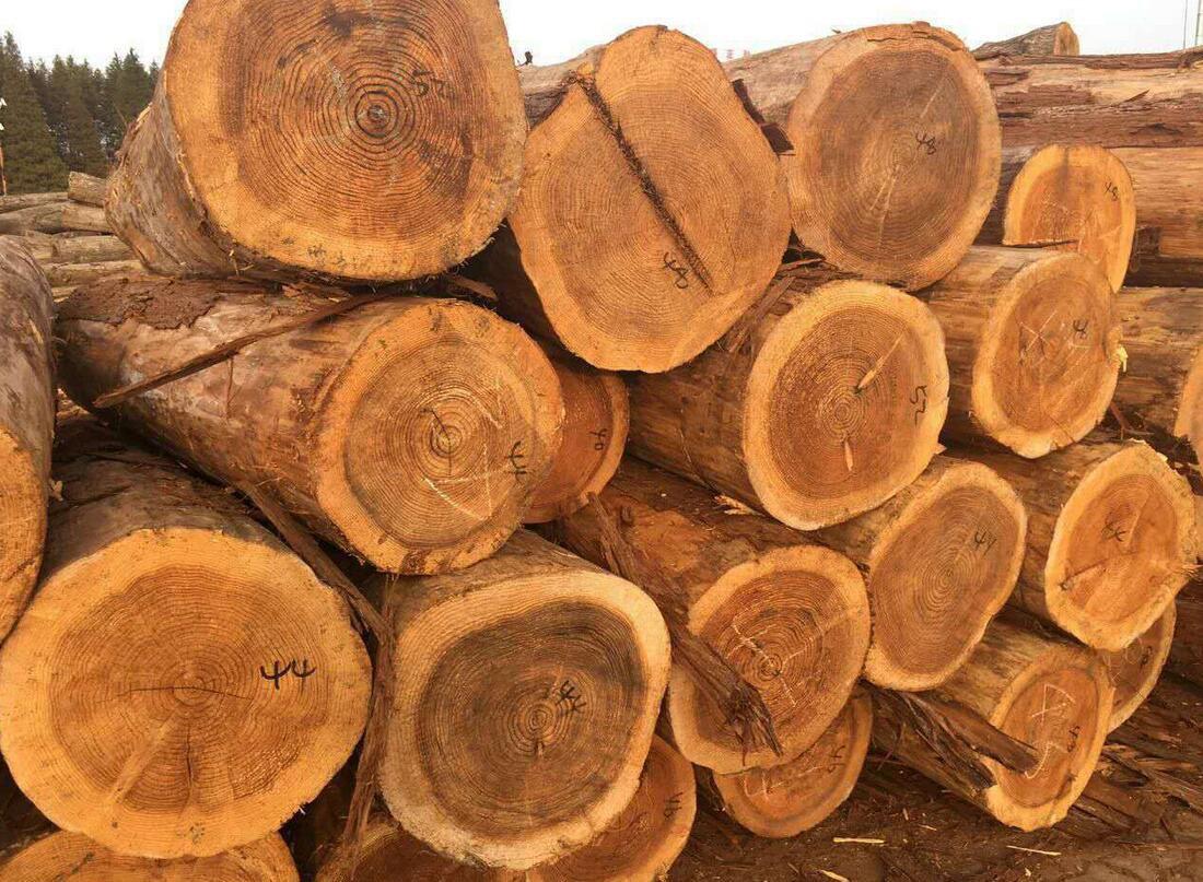 双控严格暂未对广东市场木材交易产生明显冲击