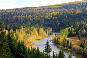 俄罗斯森林消失危机已经结束