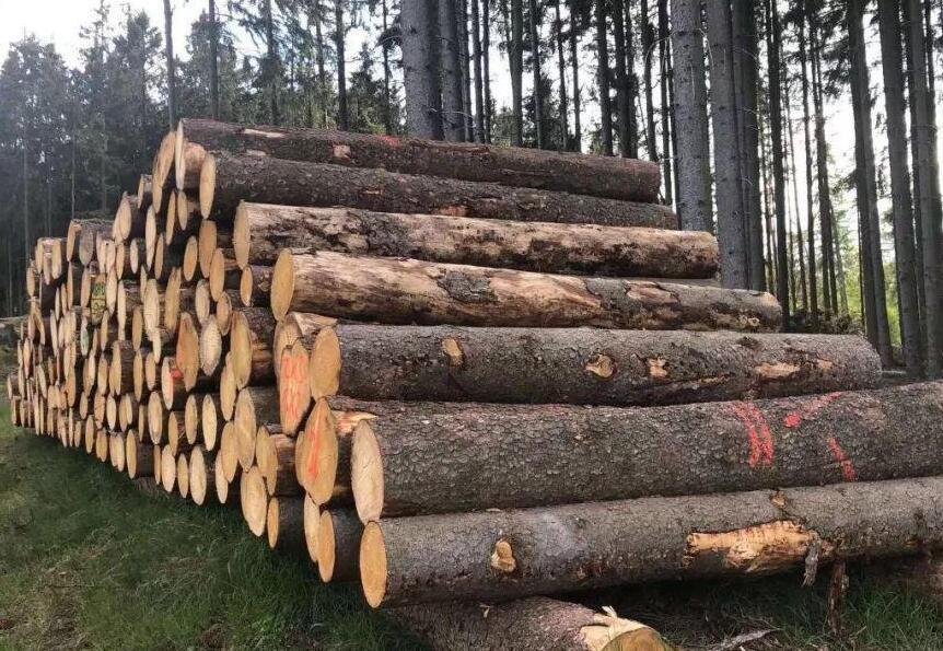 欧洲云杉原木价格行情