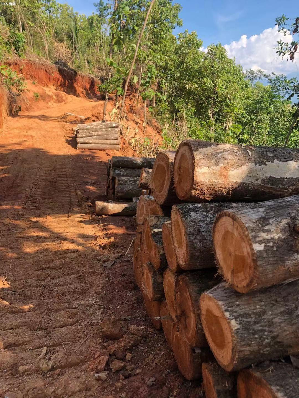 危地马拉Teak wood 及其它原木和木板图片