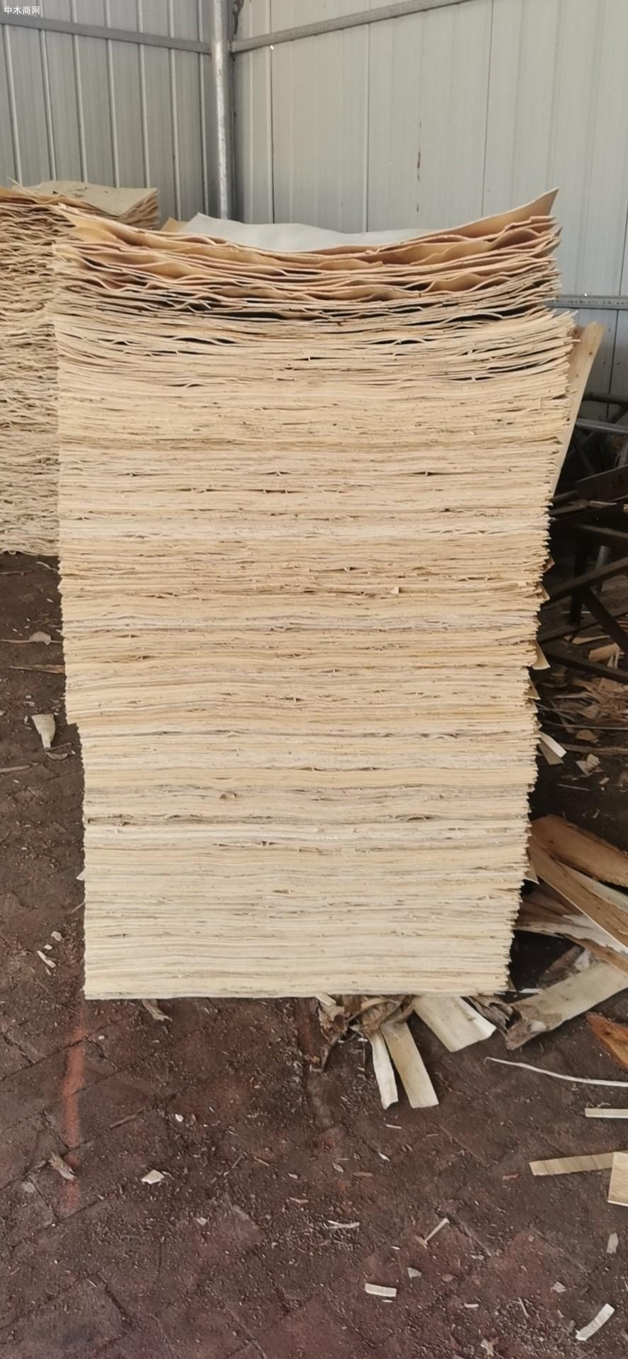 杨木木皮是什么图片