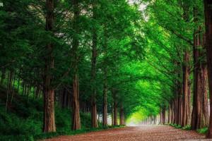 广西南宁树木园提前完成2021年木材销售任务
