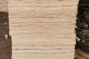 鸿坤杨木皮的用途介绍及杨木木皮多少钱一张?