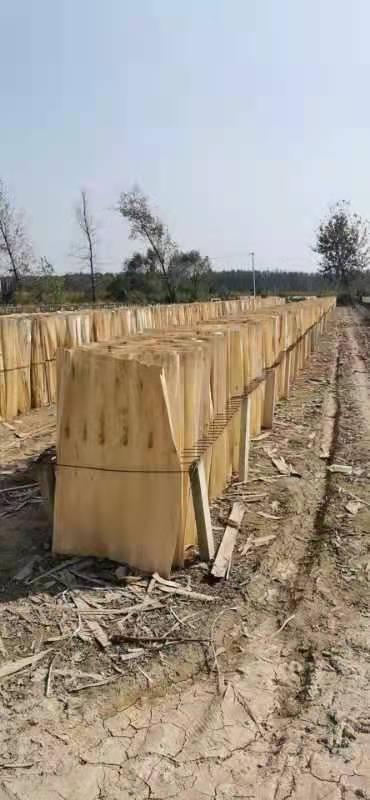鸿坤杨木皮的用途介绍及杨木木皮多少钱一张图片