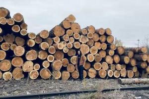 俄罗斯樟子松原木原产地直销