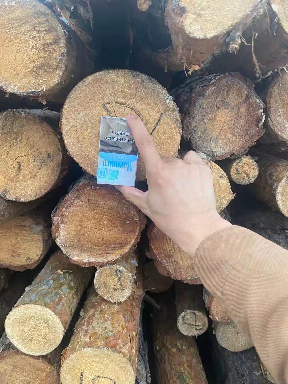 俄罗斯樟子松原木原产地直销厂家