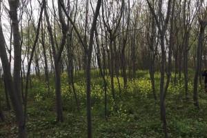 山东东明县现有林木加工企业已达800余家