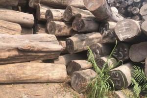 分析:东南亚国家木材市场未来形势