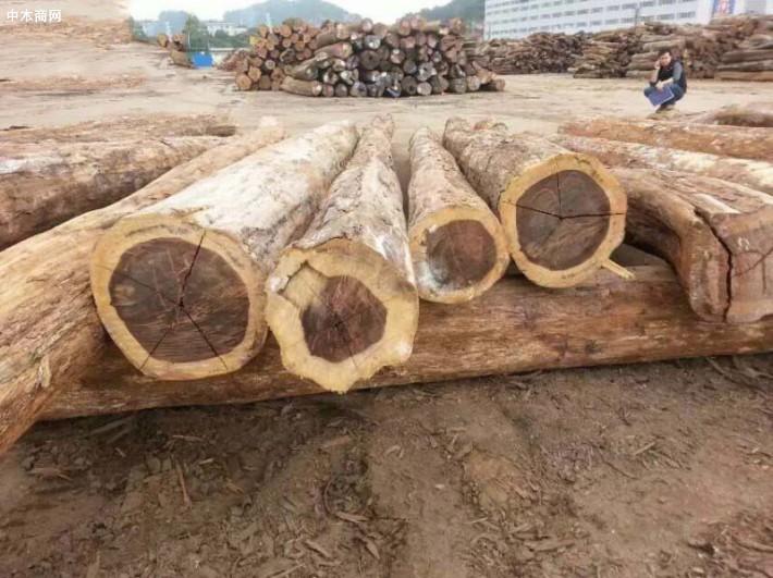 南美铁木豆价格行情