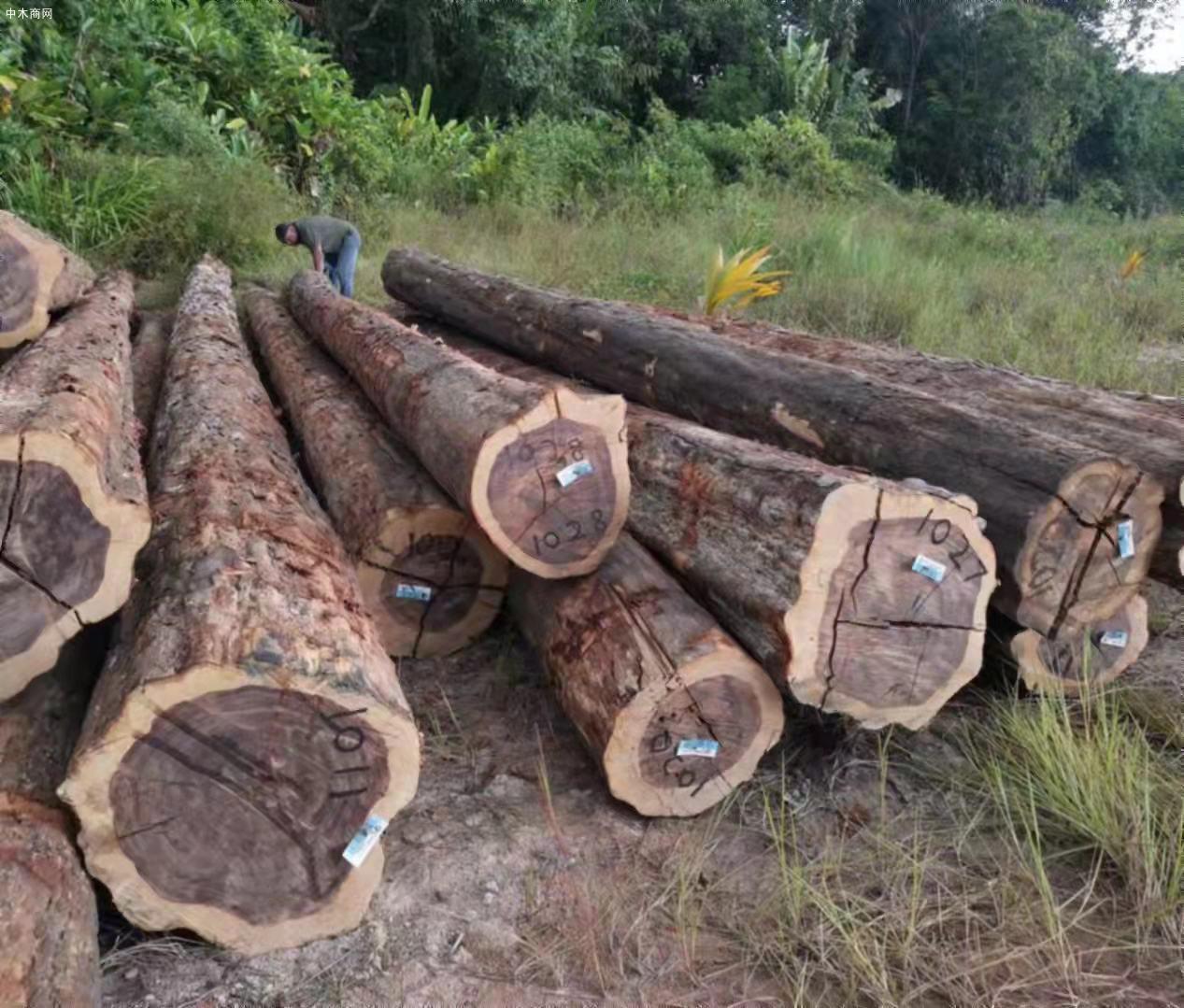 南美酸枝铁木豆原木原产地直销图片