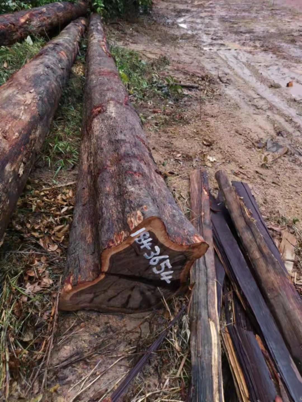 南美酸枝铁木豆原木原产地直销价格