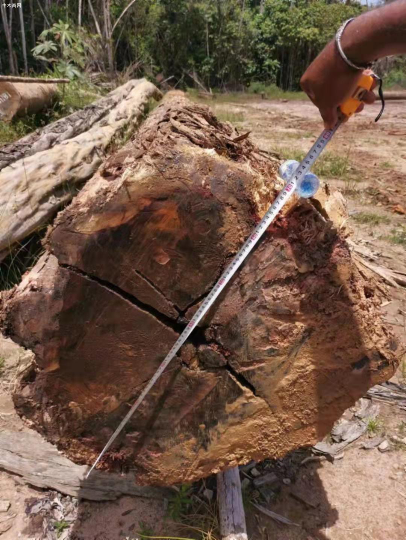 南美酸枝铁木豆原木原产地直销品牌