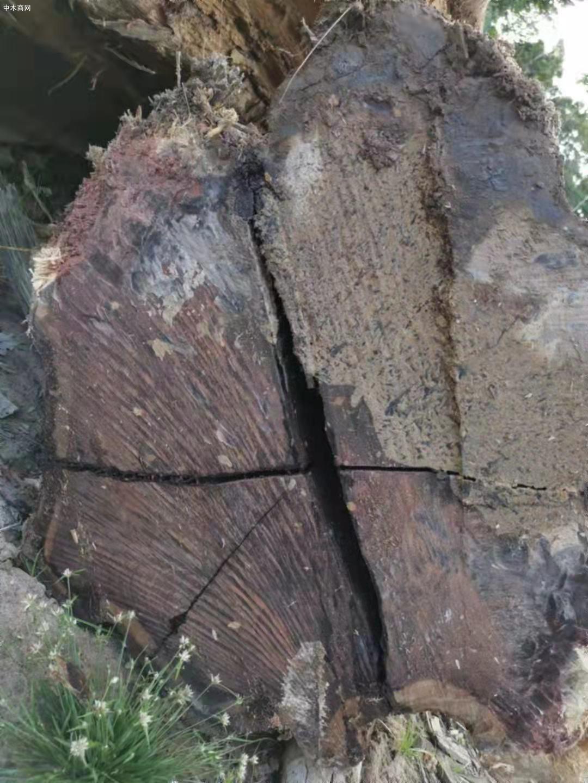 南美酸枝铁木豆原木原产地直销厂家