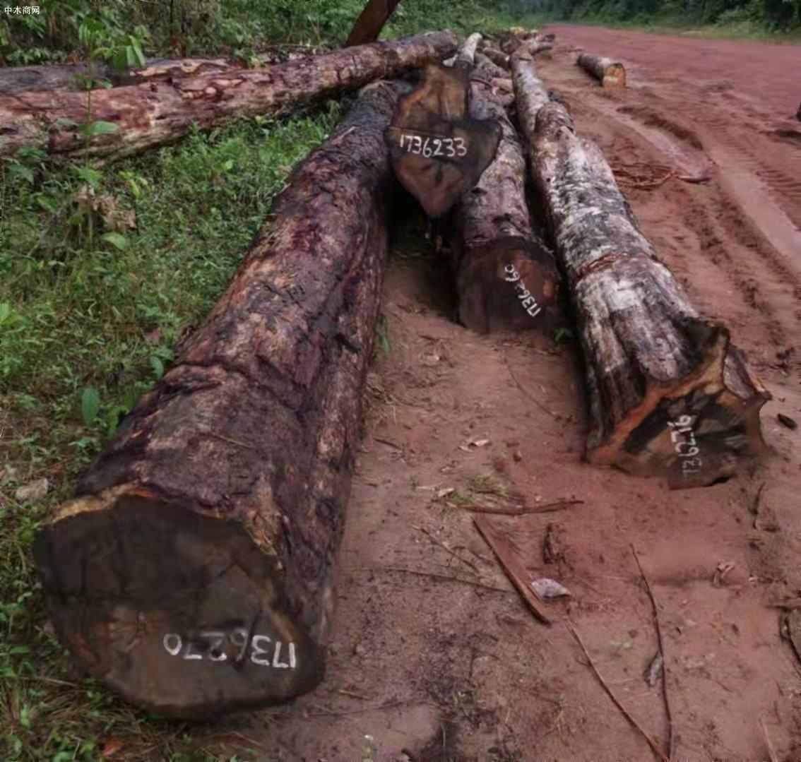 南美酸枝铁木豆原木原产地直销批发