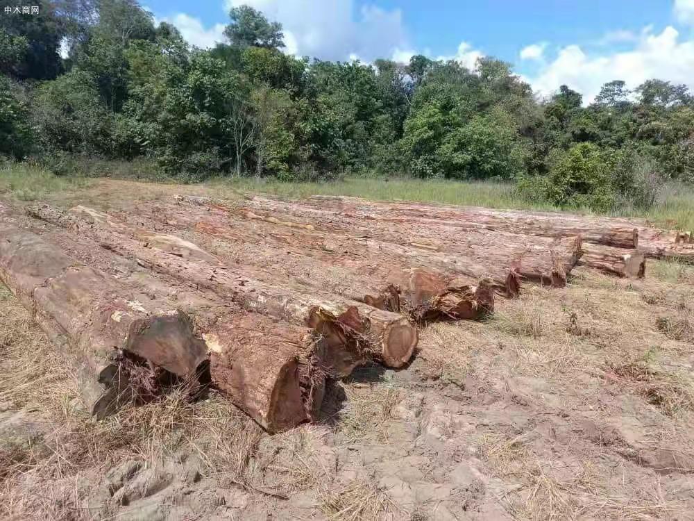 南美酸枝铁木豆原木原产地直销供应