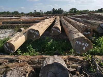 南美酸枝铁木豆原木价格多少钱一吨?