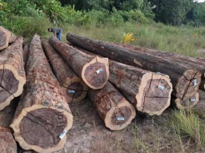 南美酸枝铁木豆原木原产地直销