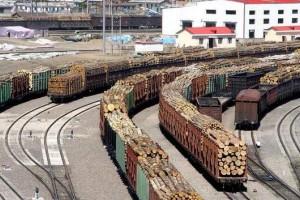 哈萨克斯坦禁止部分类型木材出口