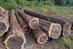南美酸枝铁木豆是什么木头?