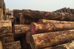 9月新西兰出口原木的码头价格平稳