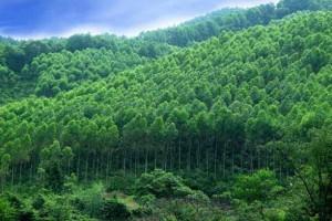 安徽省巢湖市新增三家省级林业产业化龙头企业